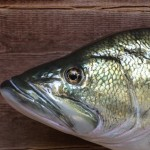 Largemouth bass eye detail
