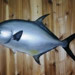 Permit (replica fish) 42 inch bruiser!