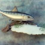 Bonefish (replica, wall pedestal)
