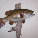 Smallmouth (tail down pose) (fish replicas)