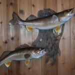Walleye pair