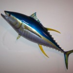 Yellowfin Tuna Replica