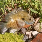 Bluegill (fish replica)
