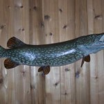 Northern Pike (replica..S-curve)