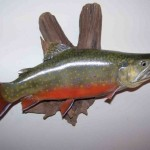 Brook Trout (museum grade replica)