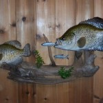 Crappie Pair (larger is replica)