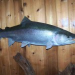 Big Steelhead (Replica)